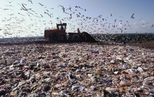 Місто планує за кошти ЄБРР розпочати рекультивацію Грибовицького сміттєзвалища