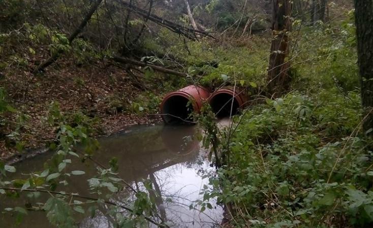 У Голосіївському парку в Києві виявили нелегальні каналізаційні стоки